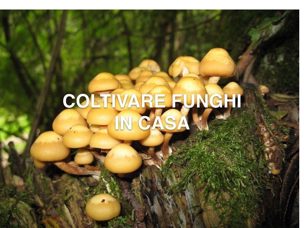 COLTIVARE FUNGHI IN CASA.001