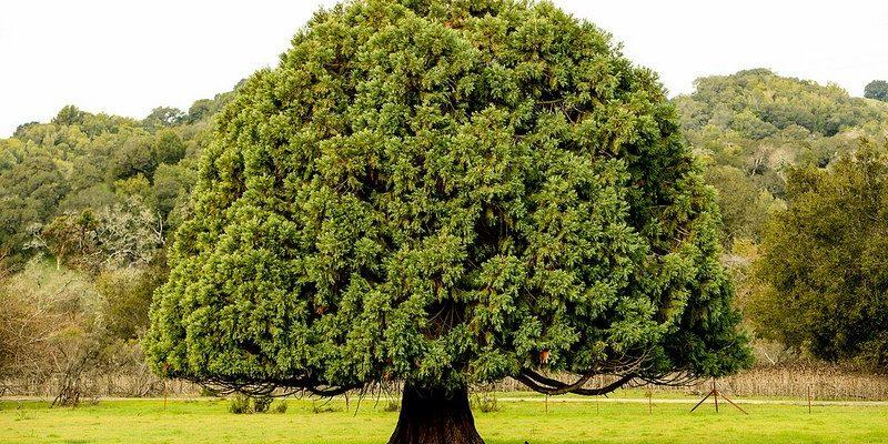 Alberi da giardini | oggi è il momento migliore per piantare un albero