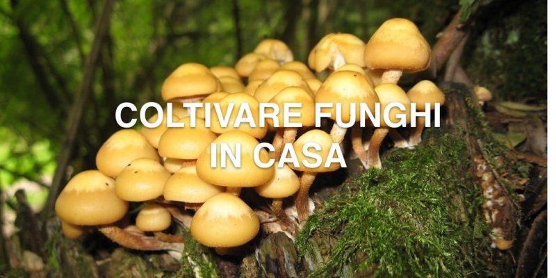 Coltivare funghi | La guida completa alla coltivazione domestica