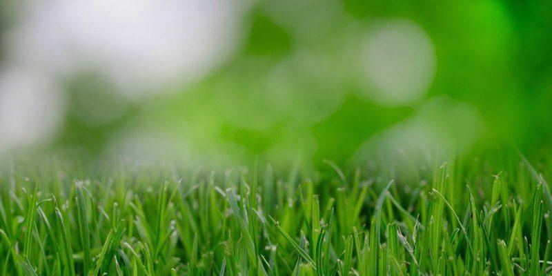 Semina Prato | Come e quando seminare il prato?